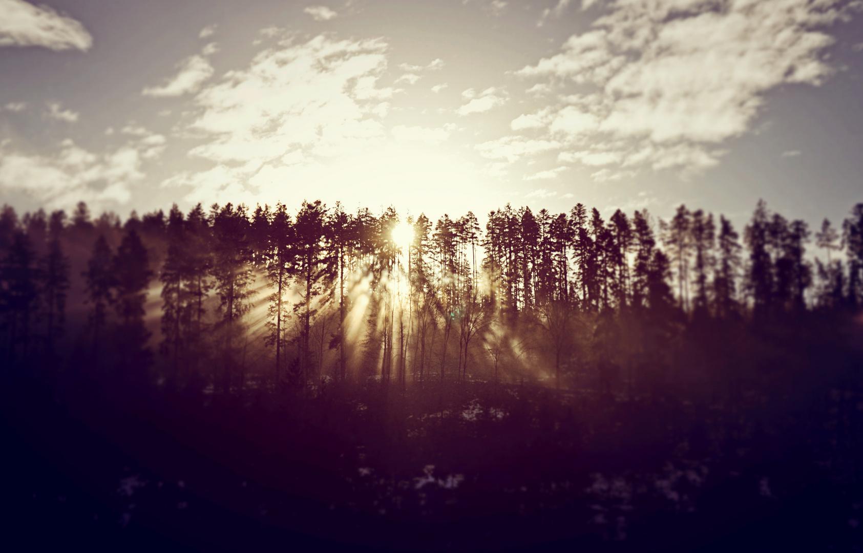 Sonnenlichtspiel im Nebel