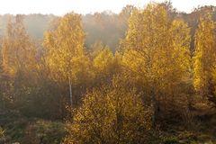Sonnennebel, Herbst 2011