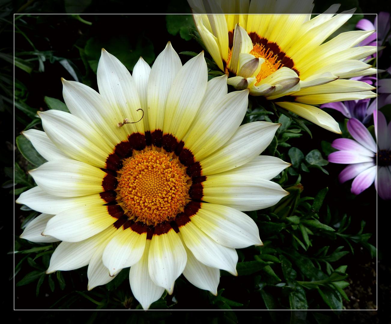 #...Sonnenschein...#