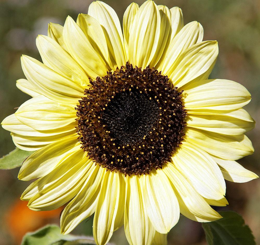 Sonnenschein für 2012
