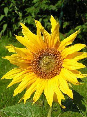 Sonnenschein - Sommer - pur; gegen Regen, Schnee und Graupelschauer