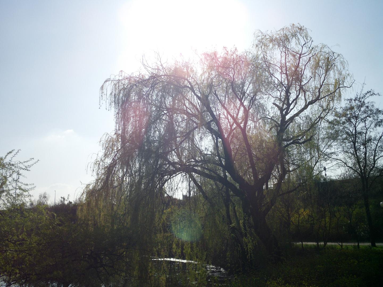 Sonnenschein und Baum
