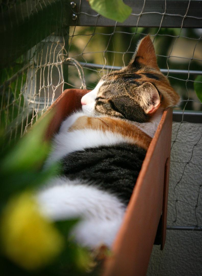 """""""Sonnenschlaf"""" im Blumenkasten :-)"""