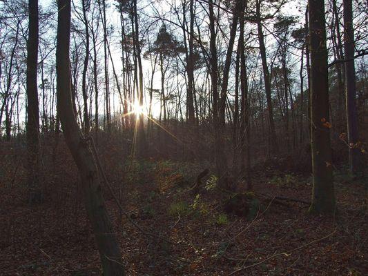 Sonnenstern im Herbstwald