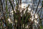 Sonnensterne im Wasser