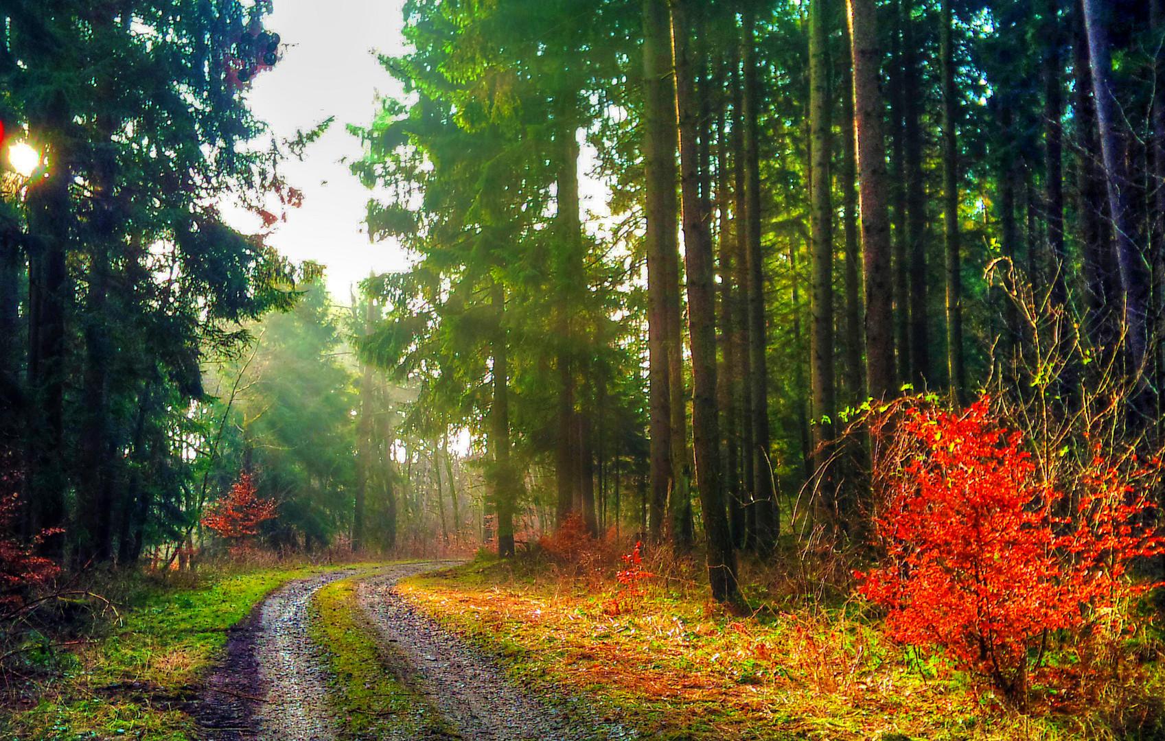 Sonnenstimmung im Winterwald