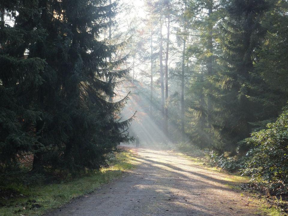 Sonnenstrahlen auf dem Waldfriedhof in Stahnsdorf
