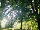 Sonnenstrahlen durch den Baum...