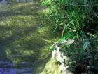 Sonnenstrahlen durchbrechen das Wasser...