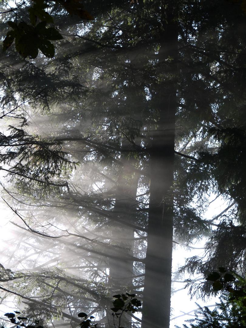 Sonnenstrahlen durchbrechen jeden Nebel und wenn es nur wenige sind.
