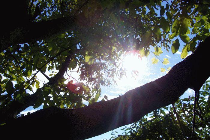 Sonnenstrahlen durchdringen Blätterwerk (Herbst 1)