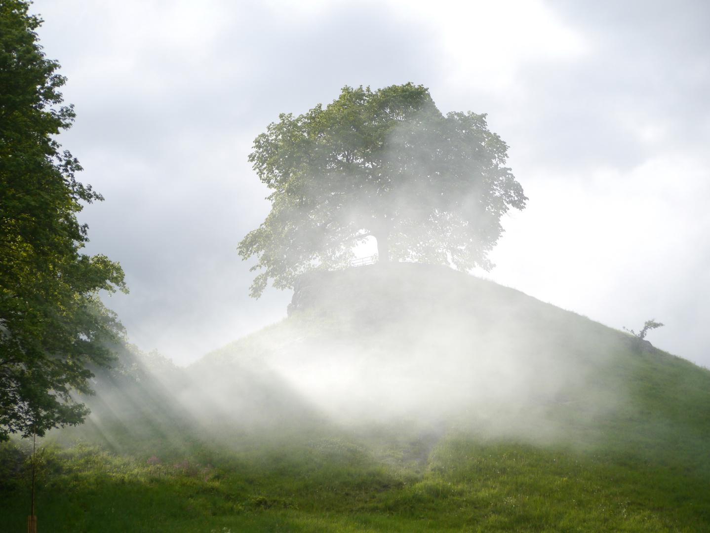 Sonnenstrahlen im Nebelkeid