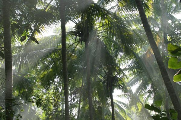Sonnenstrahlen im Palmenwald