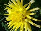 Sonnenstrahlen mit Glückskäfer