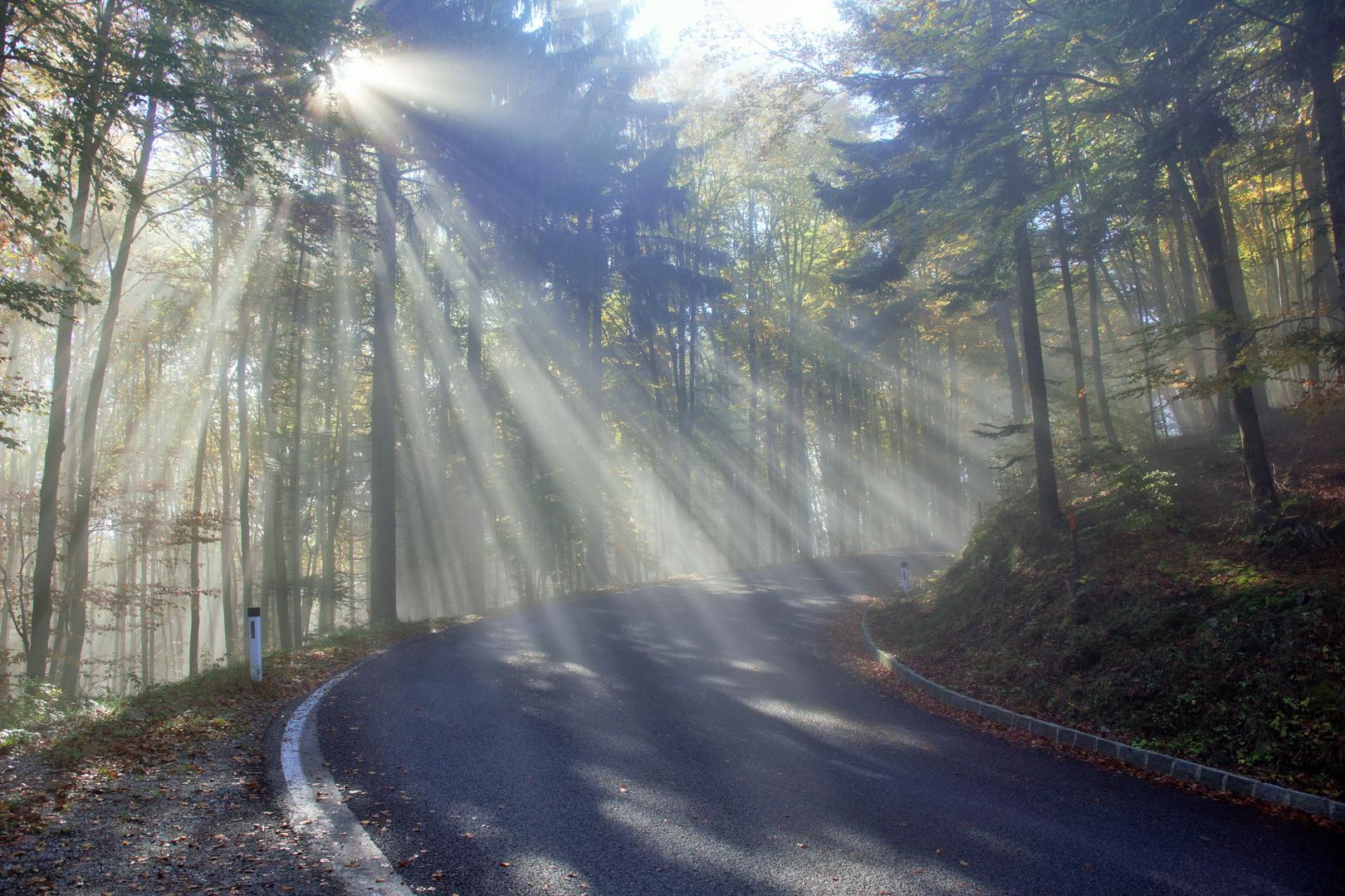 Sonnenstrahlen und Nebel