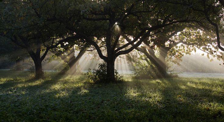 Sonnenstrahlen unterm Kirschbaum