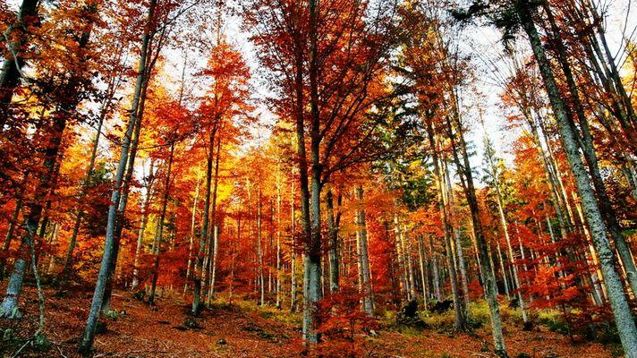 Sonnenstrahlen werden vom bunten Herbstlaub abgelenkt