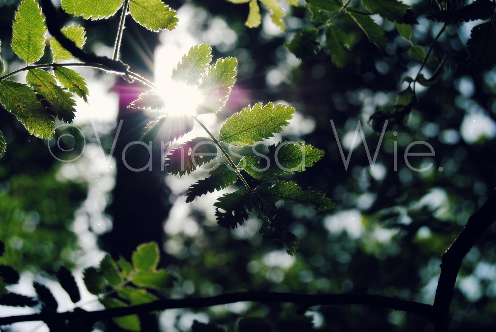Sonnenstrahlen zwischen den Blättern
