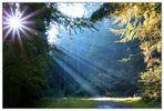 Sonnenstrahlung im Wald