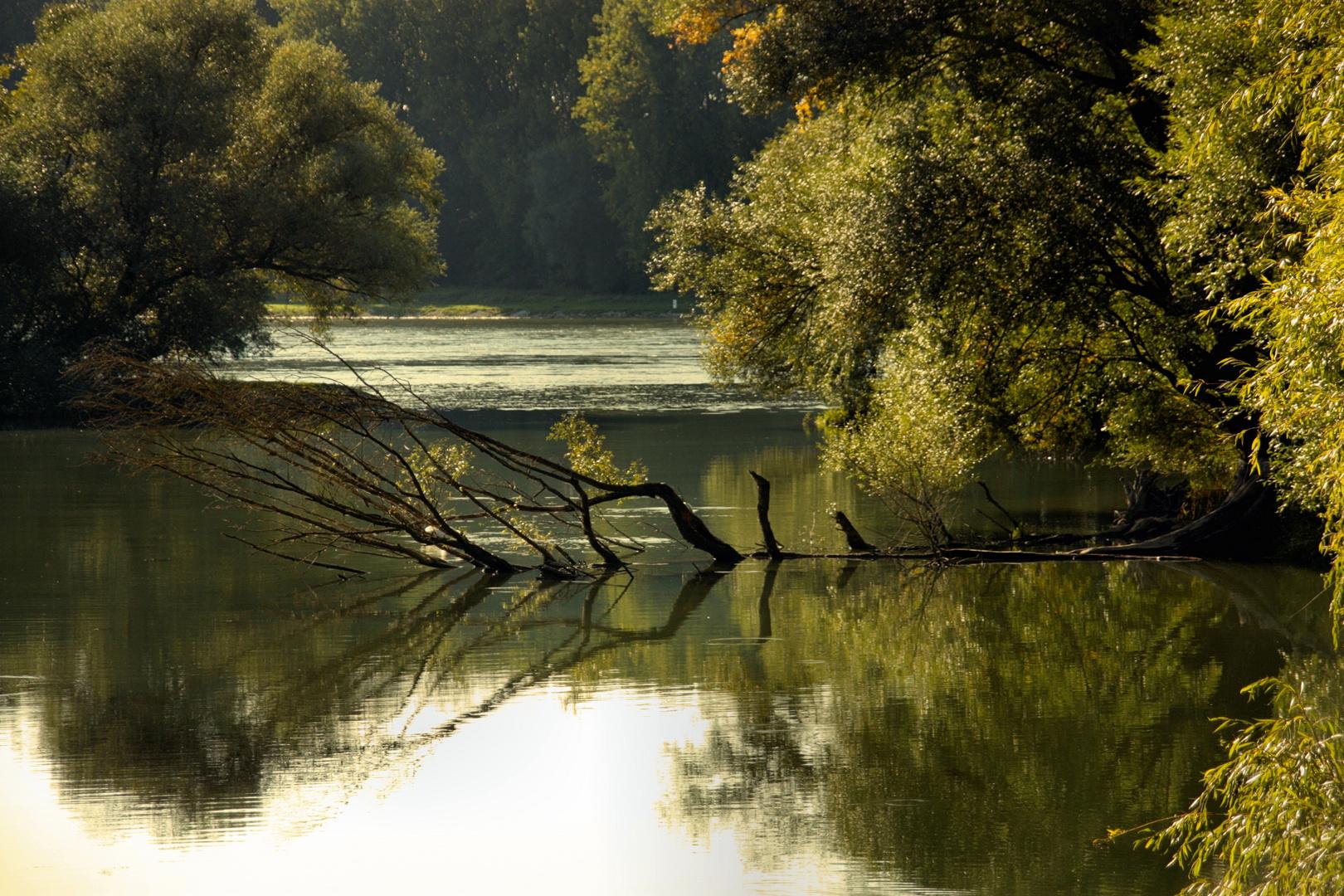 Sonnentag am Altrhein