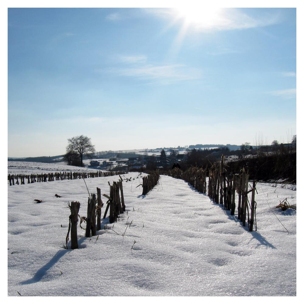 Sonnentag im Winter