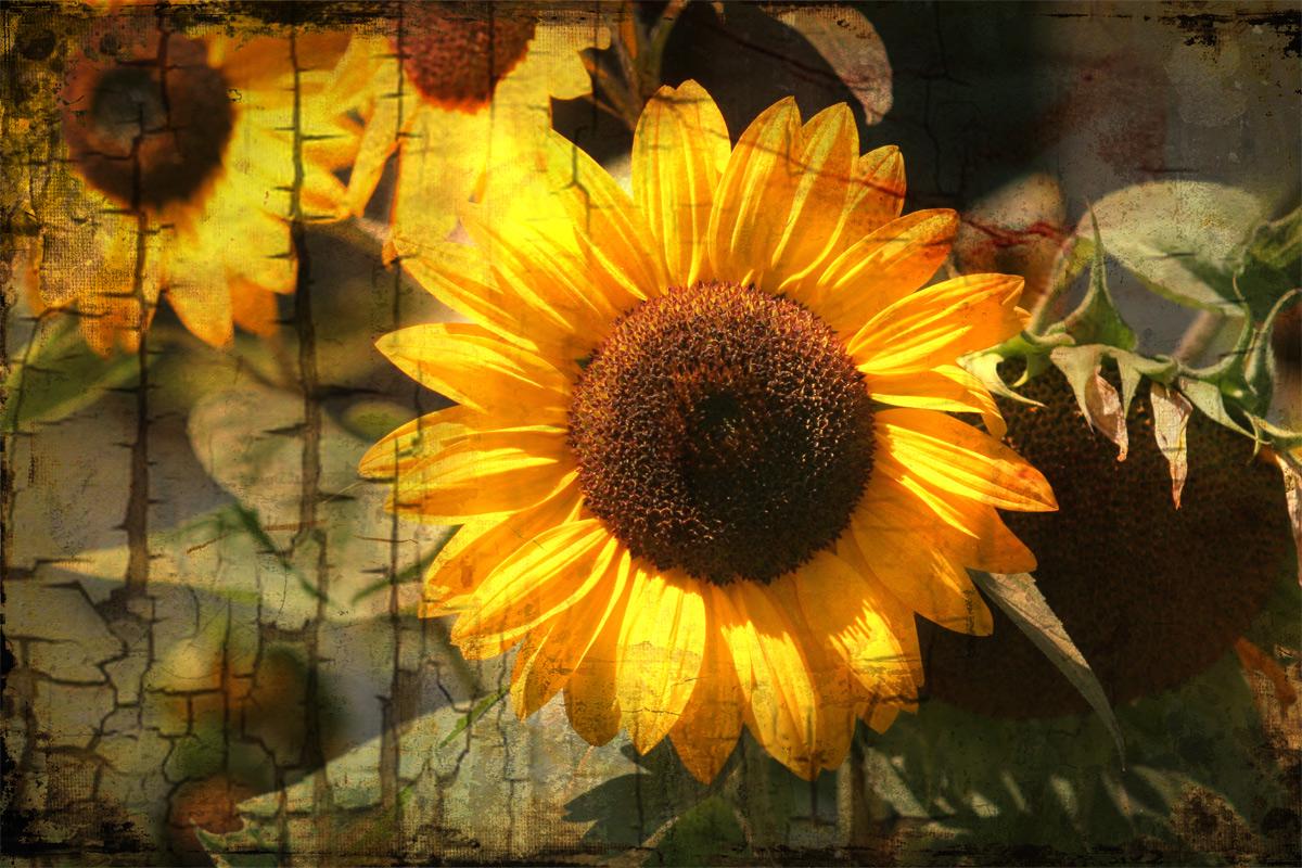 Sonnentage adddeeeeeee......