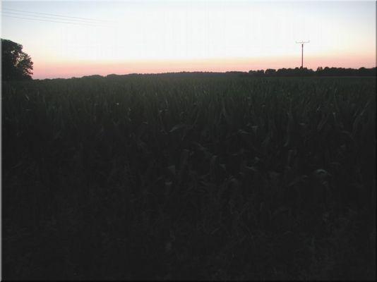 Sonnenuntegang über dem Mais