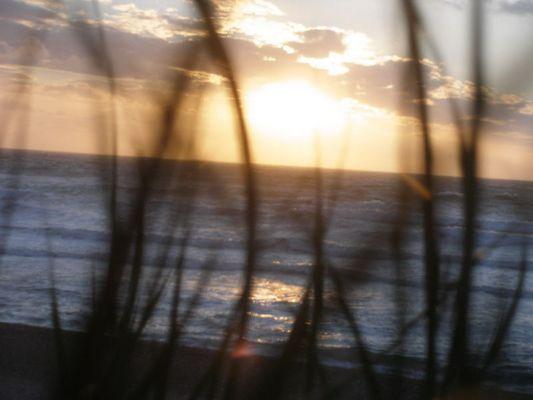 Sonnenuntergan mit Dünenegras