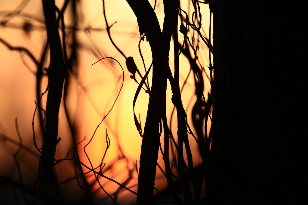 Sonnenuntergang 2 - sunset 2