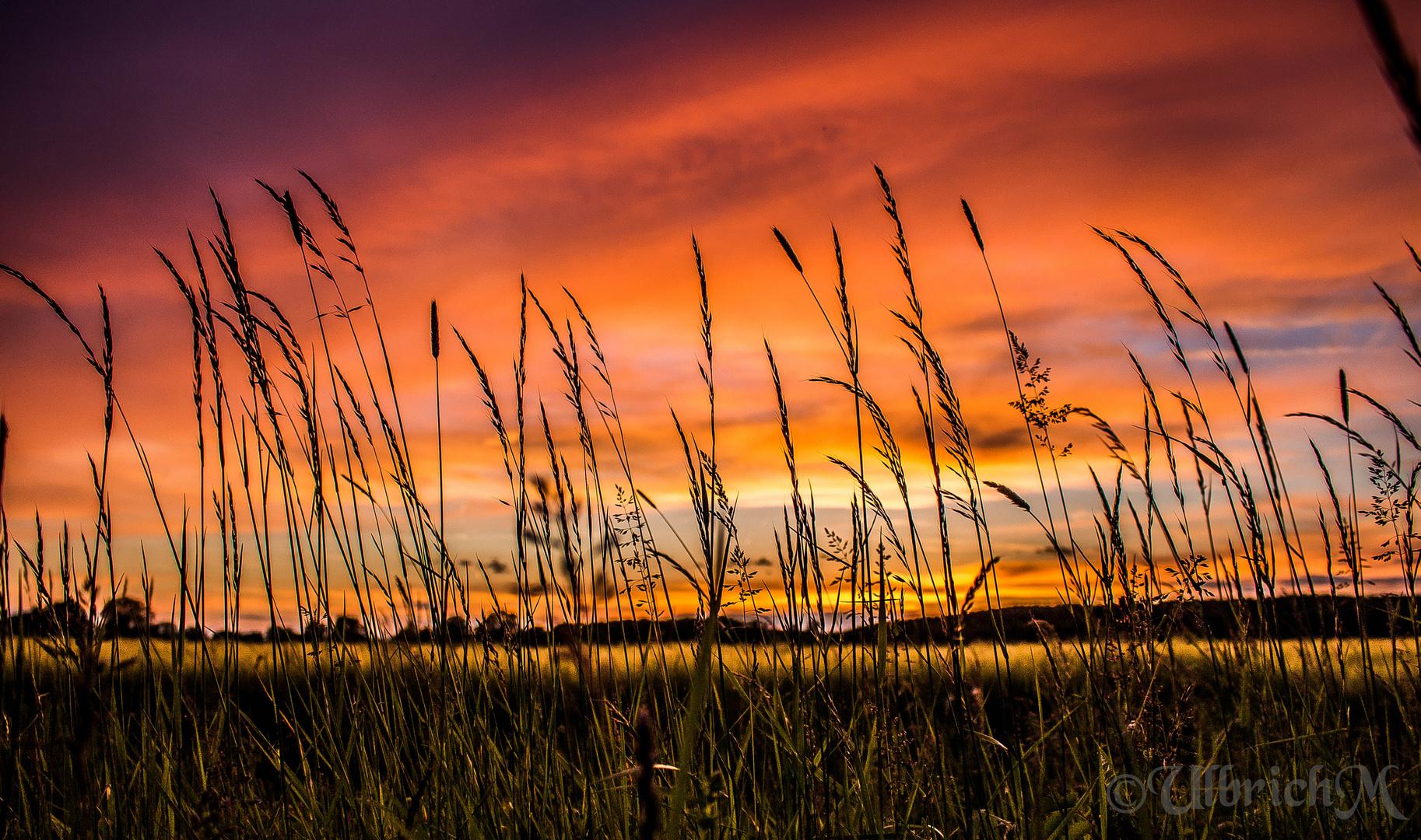 Sonnenuntergang 5