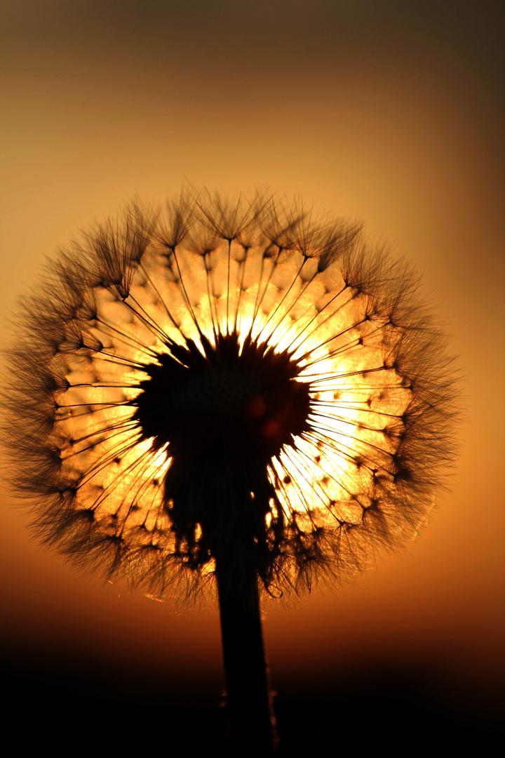 """Sonnenuntergang - aber bitte nur mit """"Sonnenbrille"""""""