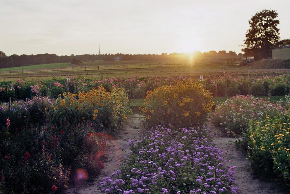 Sonnenuntergang am Acker