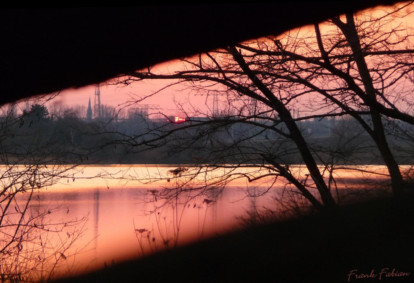 Sonnenuntergang am Baum