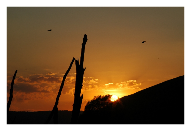 Sonnenuntergang am Biotop_#02821_1