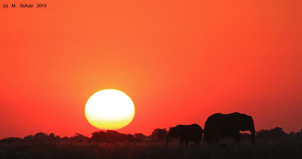 Sonnenuntergang am Chobe