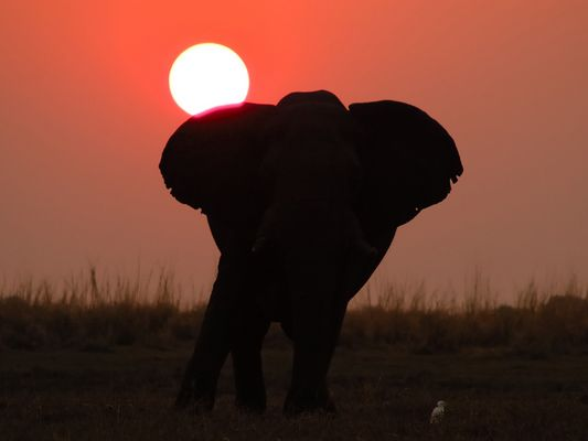 Sonnenuntergang am Chobe River