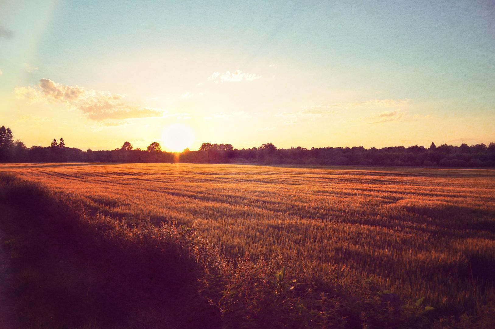 ...Sonnenuntergang am Felderrand