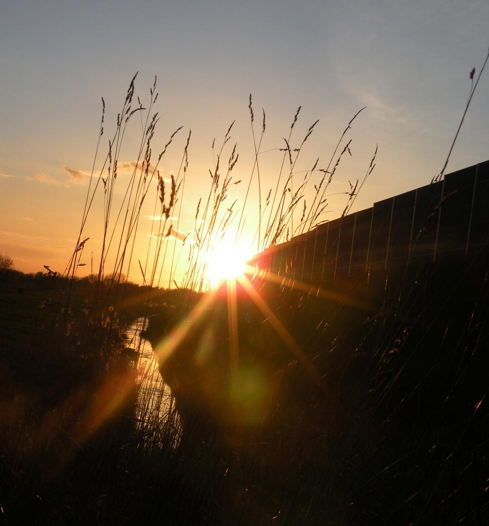 Sonnenuntergang am Feldesrand