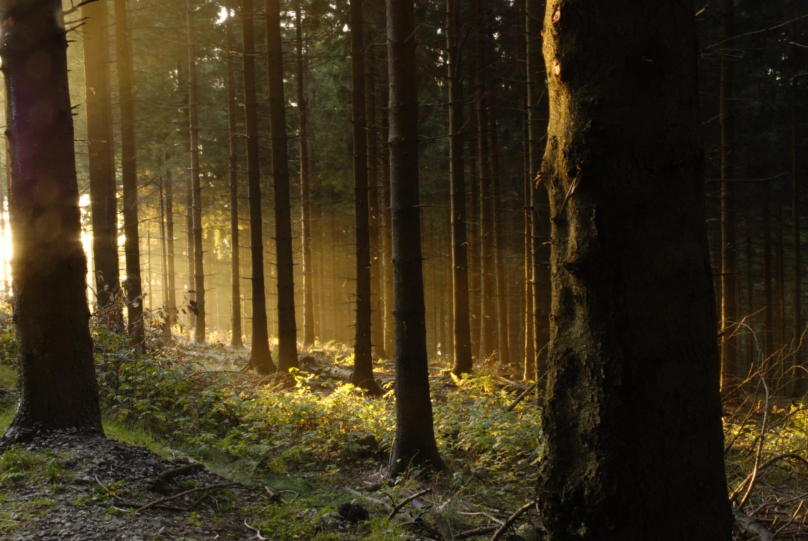 Sonnenuntergang am herbstlichen Feldberg (Taunus)
