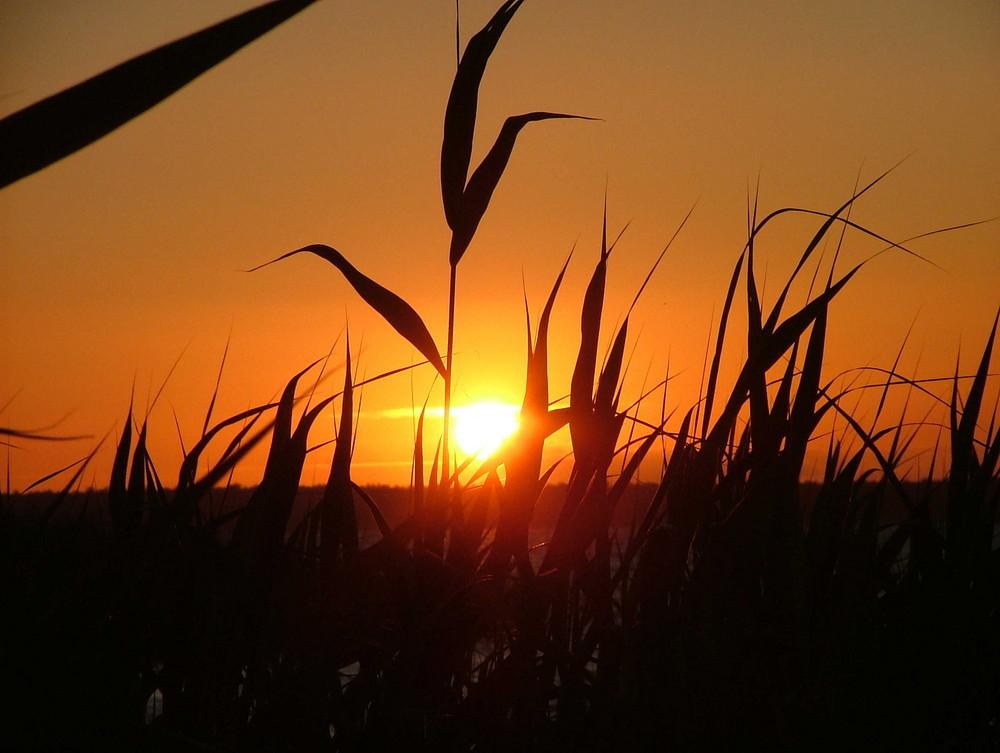 Sonnenuntergang am Saaler Bodden