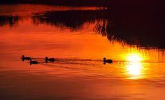 Sonnenuntergang am Schmachter See