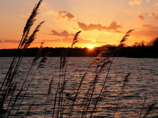 Sonnenuntergang am Tegeler See III