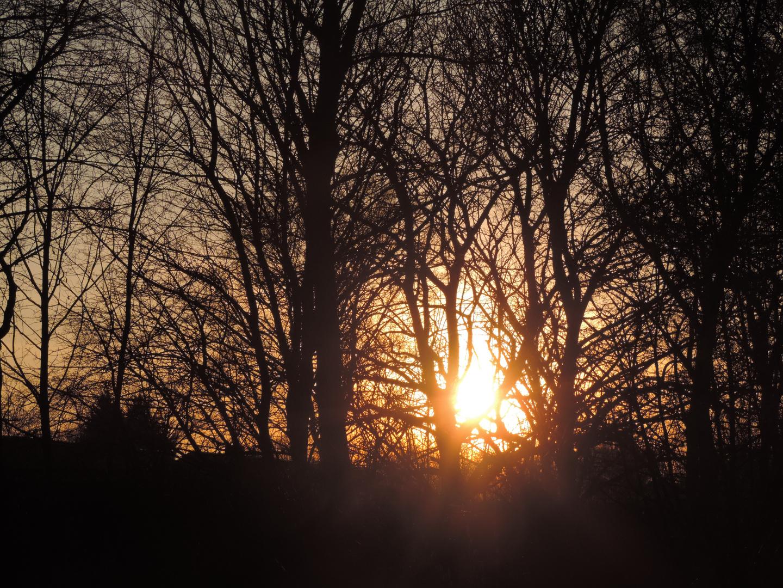Sonnenuntergang am Waldrand 1