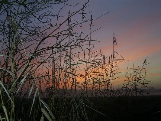 Sonnenuntergang am Wegesrand