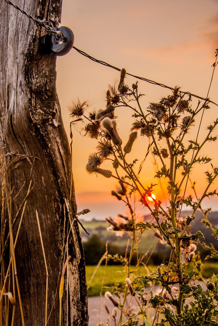 Sonnenuntergang am Zaun