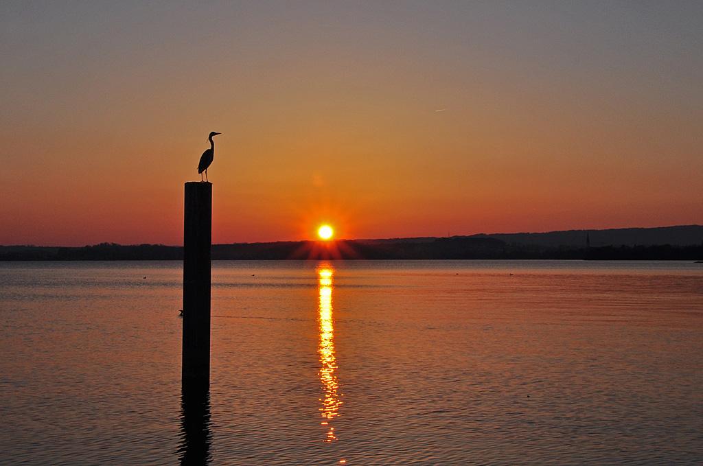 Sonnenuntergang am Zugersee