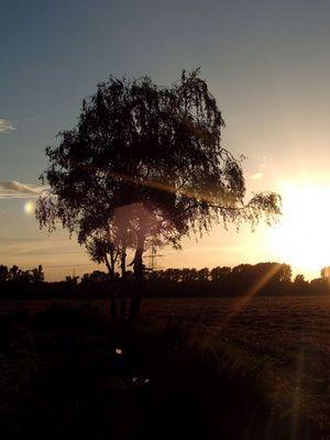 Sonnenuntergang an den 3 Birken