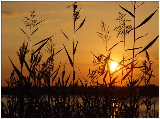 Sonnenuntergang an der Schlei