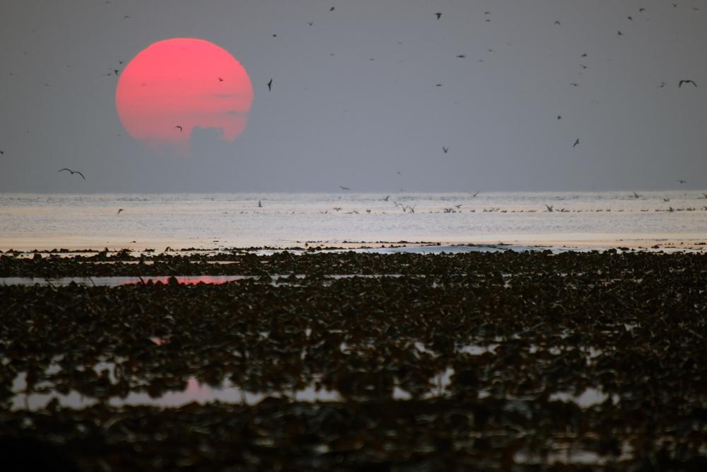 Sonnenuntergang an der Westseite Helgoland`s