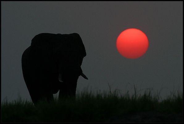 Sonnenuntergang auf dem Chobe River - reload-